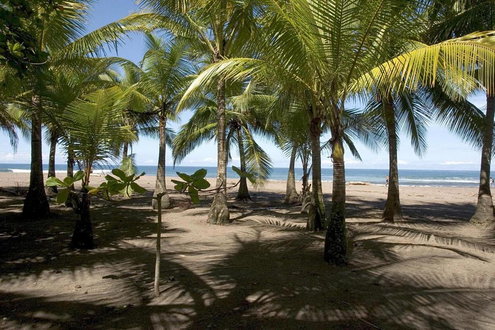 Costa rica pacific samara beach20180829 76980 3sdiil