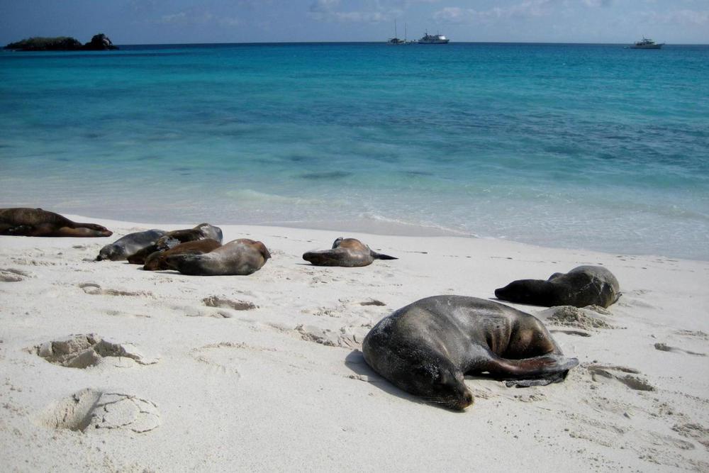 Ecuador galapagos islands gardener bay sea lions espanola island20180829 76980 d1kk90