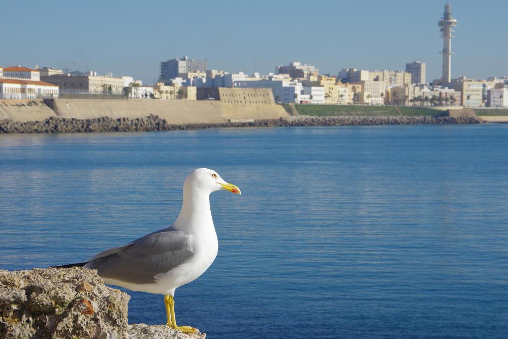 Spain andalucia cadiz seagull chris