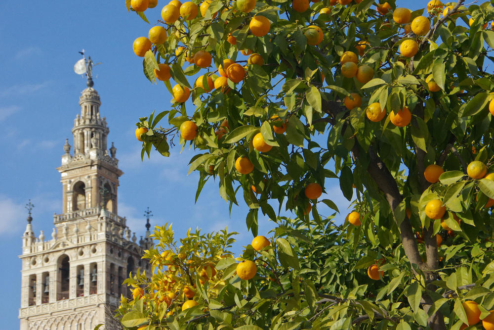 Spain seville giralda cathedral chris bladon pura