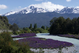Chile patagonia carretera austral spring flowers