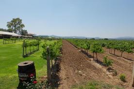 La redonda winery20180829 76980 gpu0y8