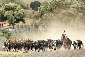 Spain andalucia cadiz medina torrestrella bulls horses c torrestrella20180829 76980 1n4ytc4