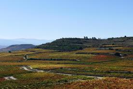 Spain basque country la rioja vineyards behind baigorri20180829 76980 1pe0s9t
