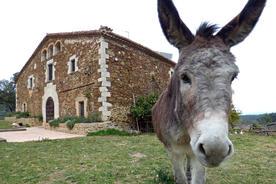 Spain catalonia girona empurda donkey gavarres arriving madremanya