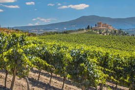 Spain rioja castle overseeing vineyards with rows of grapes from a hill on a clear summer day20180829 76980 1wfutdt