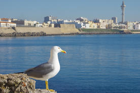 Spain andalucia cadiz seagull chris