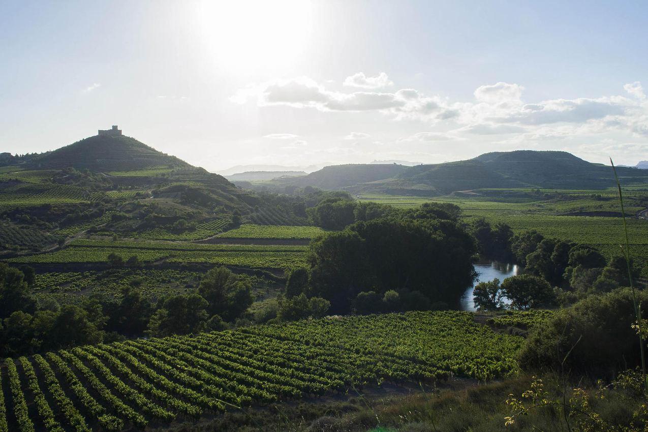 spain-rioja-castle-ebro-vineyards-c-dmartin