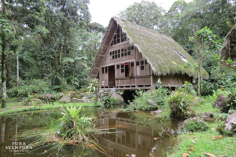 Amazon Cloudforest