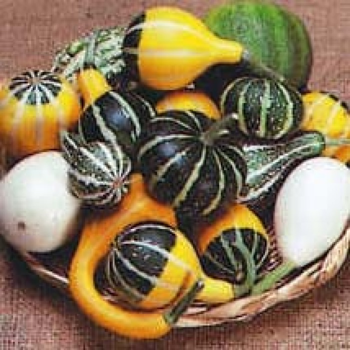 Fancy Small Types Gourd Mix