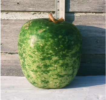 Speckled Apple Gourd