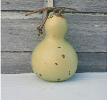 Chinese Small Bottle Gourd