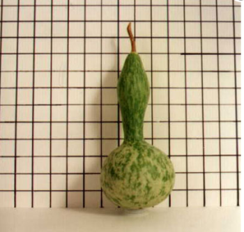 Small Lump In Neck Gourd