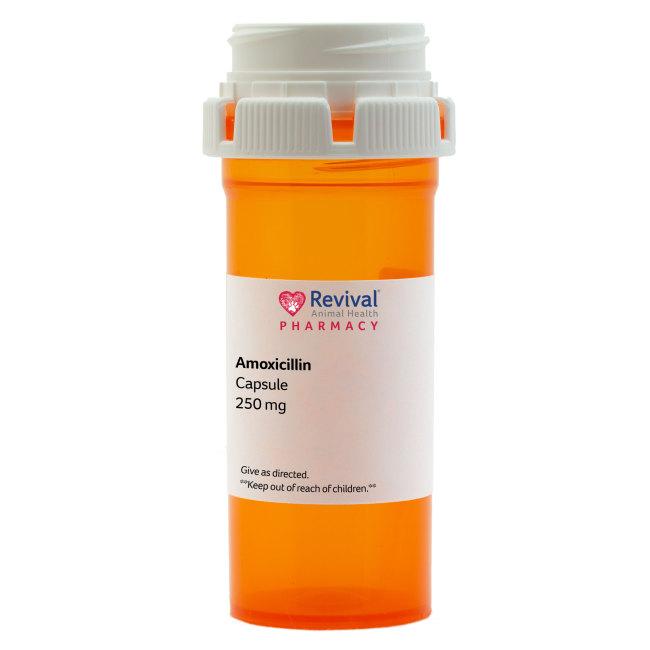Amoxicillin Capsules (Generic)