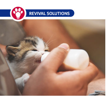 Avoid Bottle Feeding Issues in Kittens and Puppies