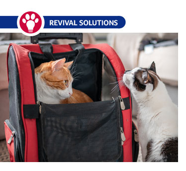 Cat Carrier Tips: How to Take a Cat to the Vet