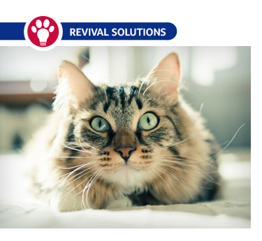 8 Cat Diseases You Can Prevent