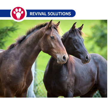 Deworming Horses: Deworming Rotation Schedule