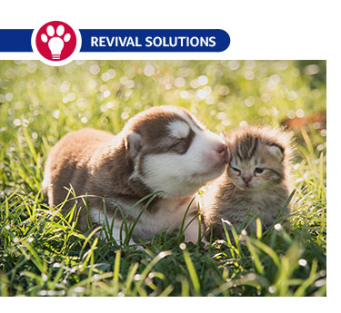 Electrolytes: Fluid Therapy for Puppies & Kittens