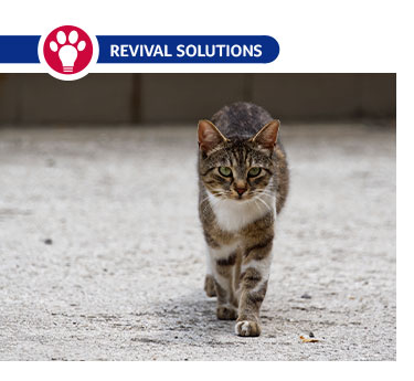How to Help Stray Cats and Feral Felines