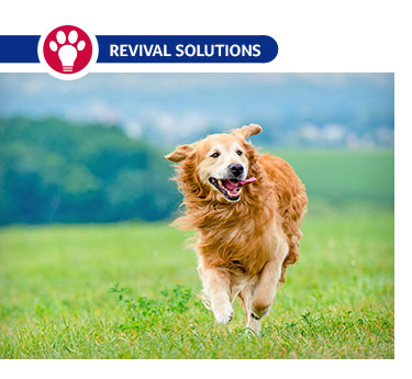 Joint Health Supplementation for Dogs