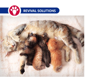 Managing Queens – Helping Cats Give Birth