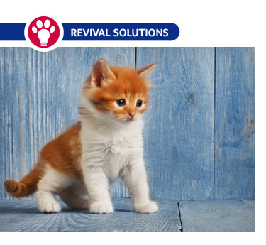Nebulizer Treatment for Dogs and Cats