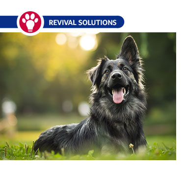 How to Use Ovulation Detectors for Dogs
