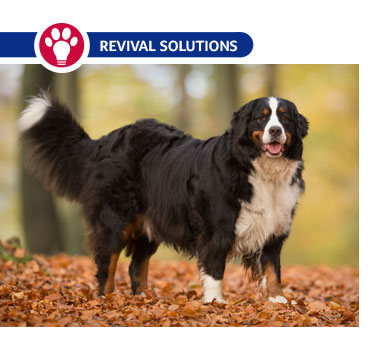 Prenatal Vitamins for Dogs