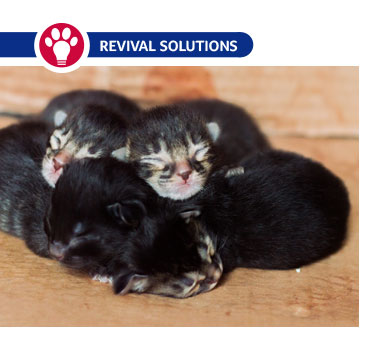 Raising Orphaned Kittens
