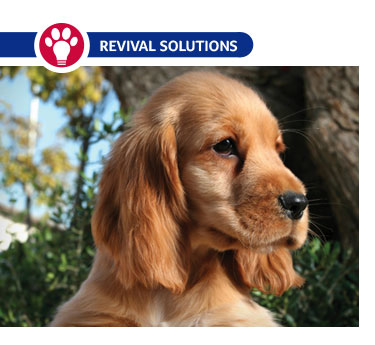 Seborrhea in Dogs: Causes, Symptoms and Treatment Oily Seborrhea In Dogs Treatment
