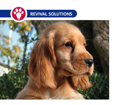 Seborrhea in Dogs: Causes, Symptoms and TreatmentOily Seborrhea In Dogs