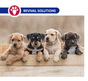Tips for Puppy Socialization: How to Reduce the Risk of Behavior Problems