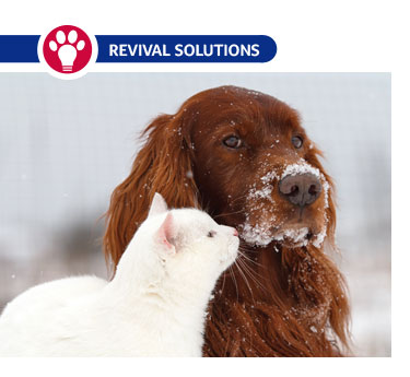 Fall and Winter Health Issues in Pets