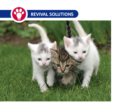 Deworming Feral Cat Colonies