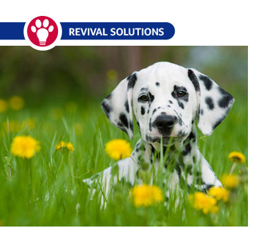 Environmental Allergies in Dogs and Cats