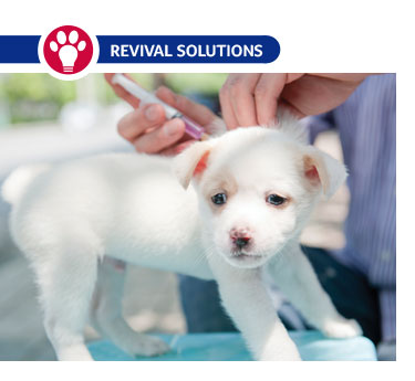 How to Vaccinate Your Dog or Cat