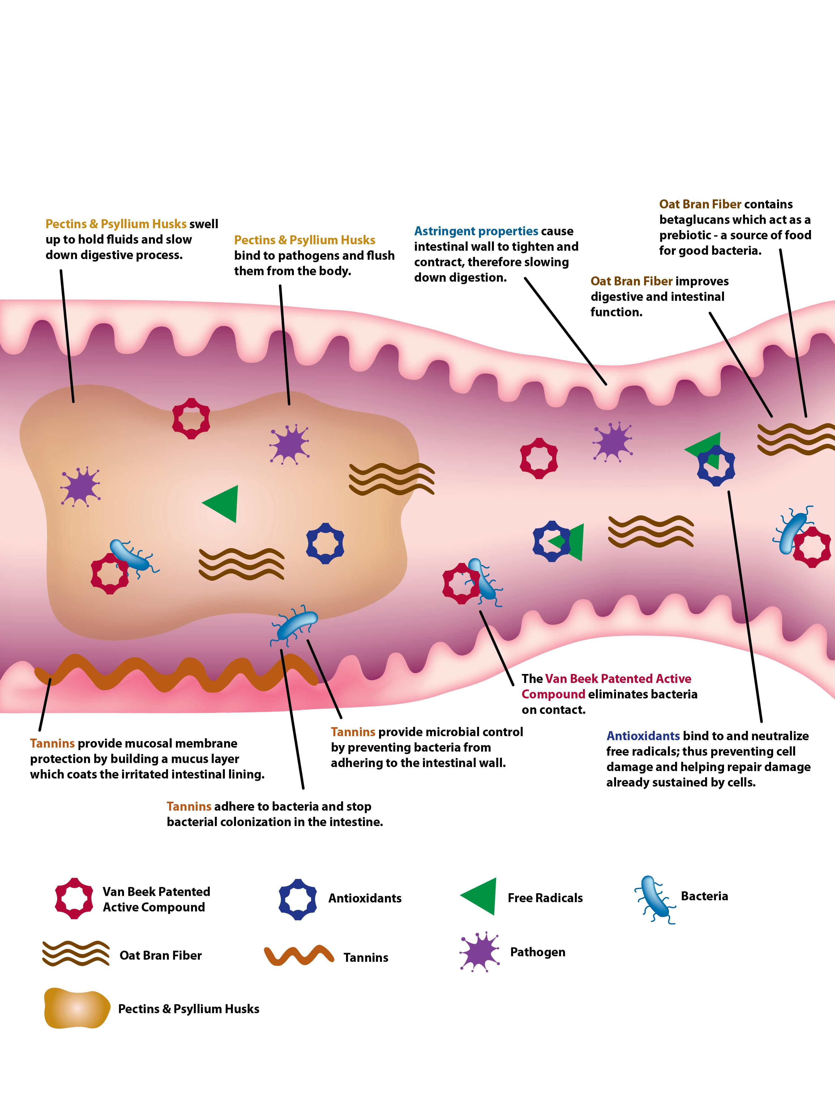 Dewormer ivermectin