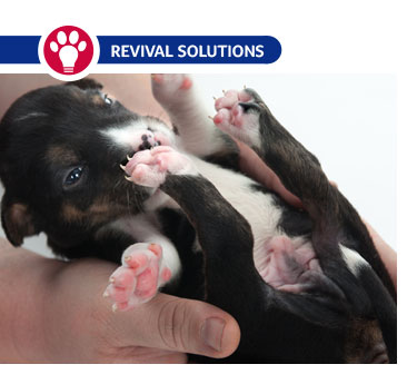 Kitten and Puppy Umbilical Cord Care