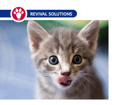 Tube Feeding - Puppies or Kittens
