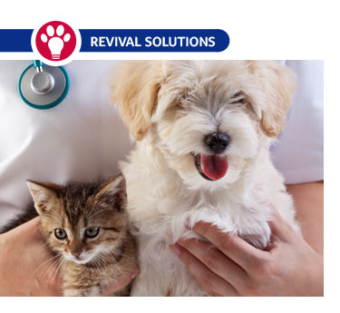 A Guide to Dog and Cat Vaccinations