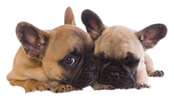 Airway Abnormalities in Puppies & Kittens