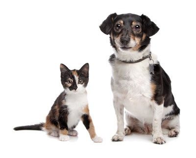 Fatty Liver Syndrome in Puppies and Kittens