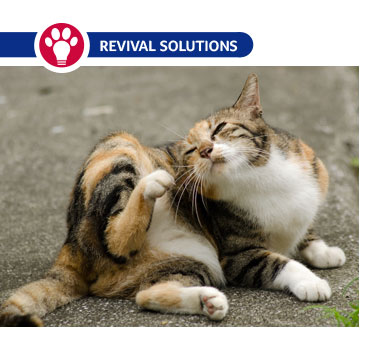 Complications of Flea Infestations