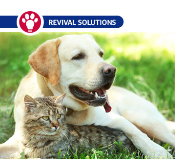 Managing Parasites in Dogs and Cats