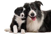 Managing Pregnancy Problems in Dogs