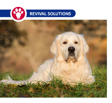 Benefits of Using Essential Fatty Acids Daily