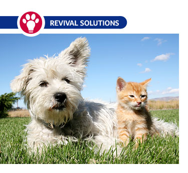 Worming Schedule for Puppies, Kittens, Cats & Dogs | Deworming Puppies