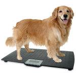 Large Precision Digital Pet Scale