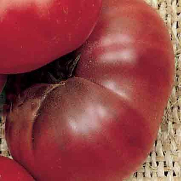 Black Brandywine Tomato